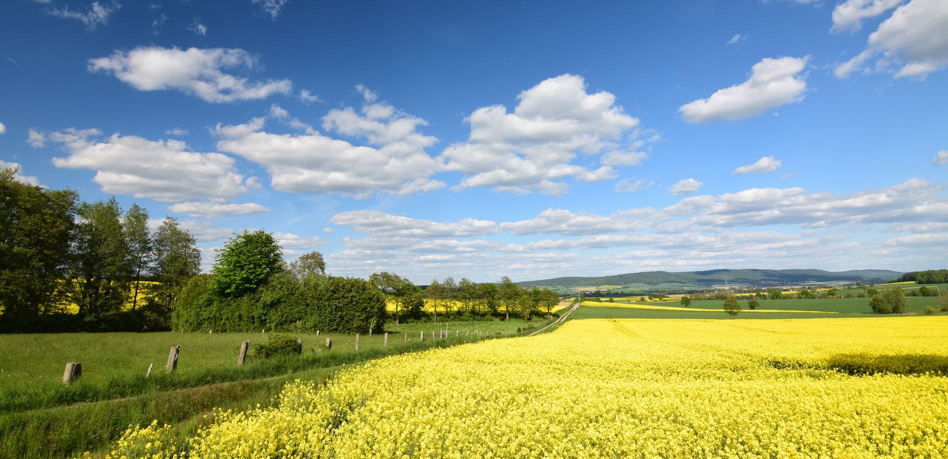 Sommer - Felder unter einem klaren blauen Himmel